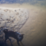 Pinhole | Dog | Experiments without lens | Project DIGITAL PINHOLES - 2011